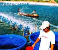 Cách nuôi cá Diêu Hồng?